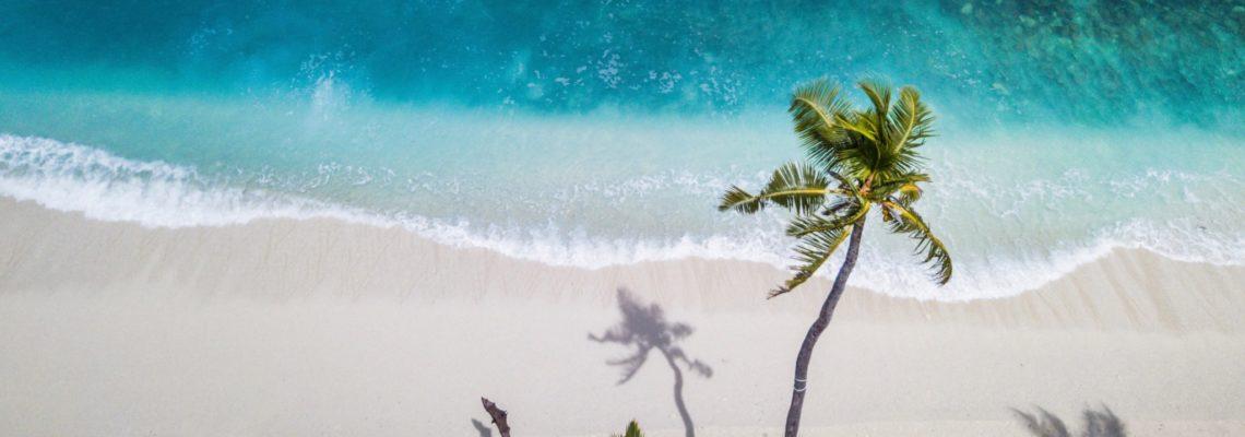 Tropical Trip